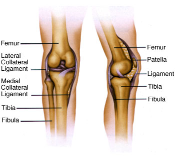 Total Knee Replacements in Mumbai - Knee Surgery Day